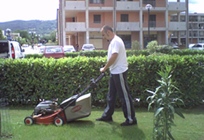 Servizio tosatura prato e giardinaggio